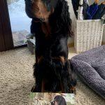 Įspėjančioji lentelė su Jūsų šuniuko nuotrauka 30x20cm